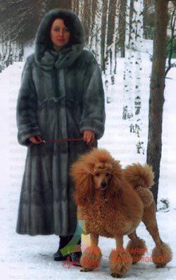 Джойнт Флекс - собачье здоровье