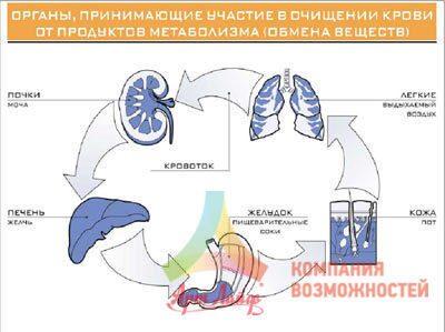 очищение организма от паразитов народными
